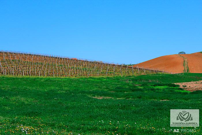 Die Weinstraße von Daruvar