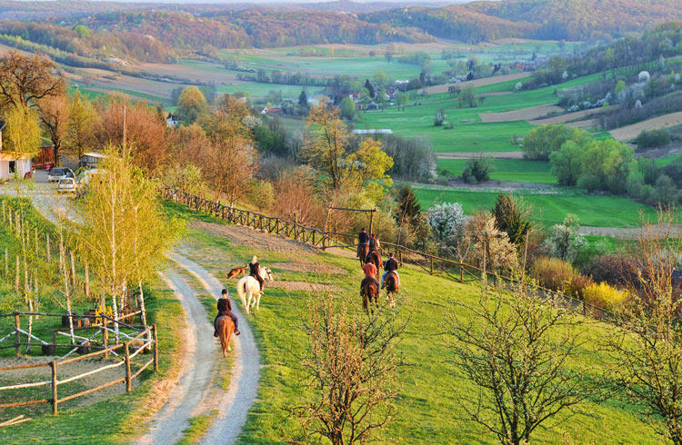 Pferde-Club Konji gizdavi