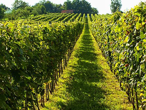Weinstraße von Bilogora