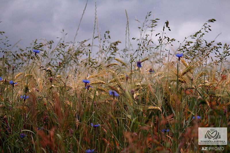Bjelovarsko polje